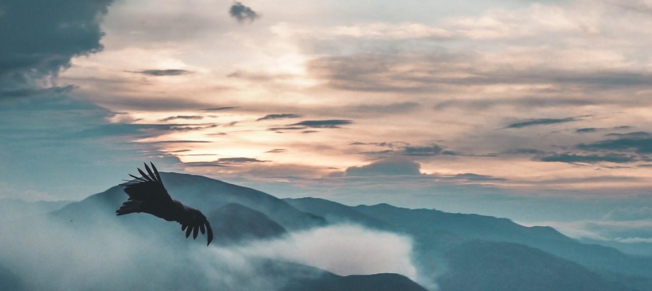 Kondor in den Anden