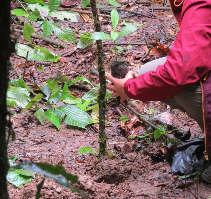 Pflanze deinen eigenen Baum im Manú-Nationalpark