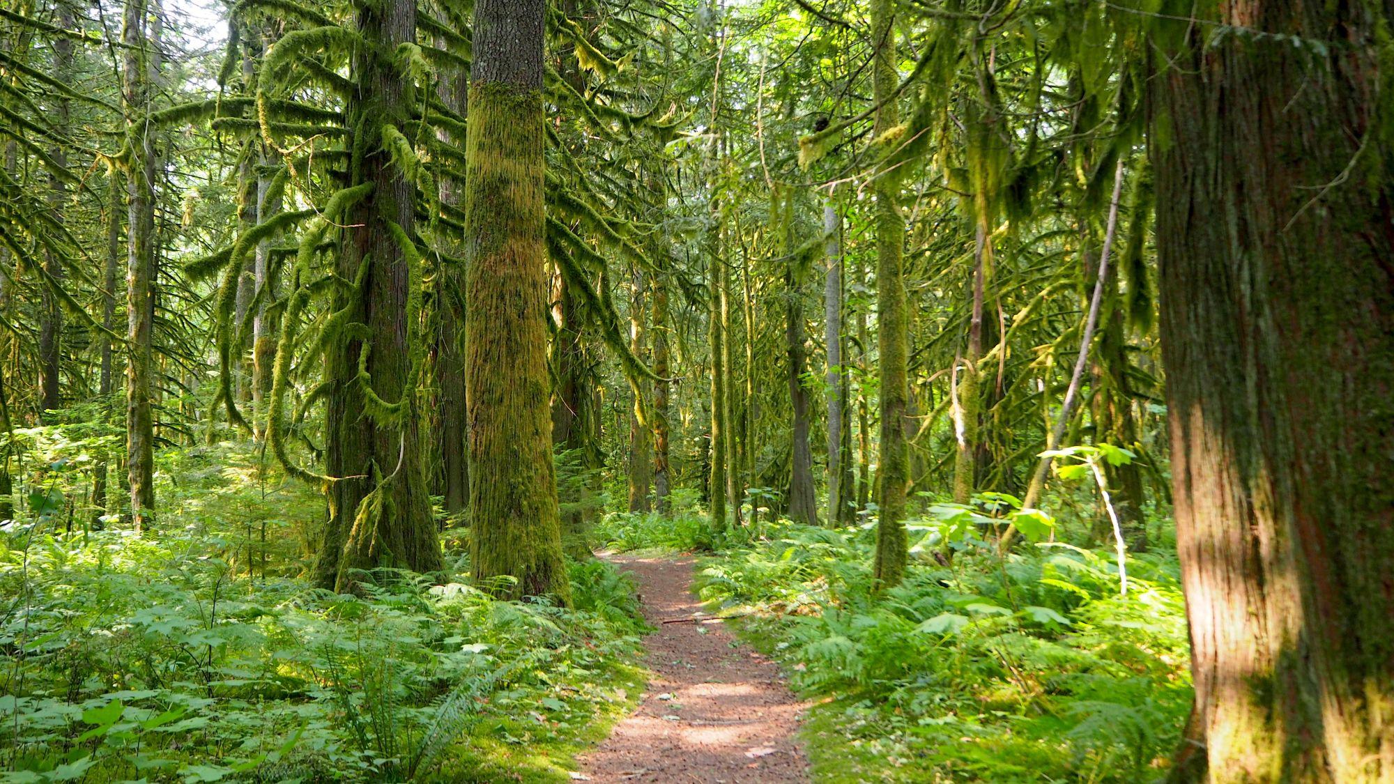 Dschungel in Kanada